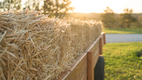 Steps to Take After a Hayride Accident This Autumn